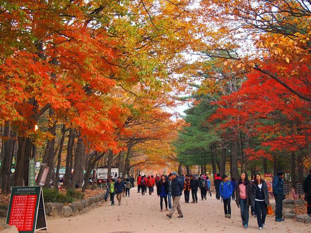 ชมใบไม้เปลี่ยนสี สวย ๆ ที่ อุทยานแห่งชาติซอรัคซาน เกาหลีใต้กันจร้า