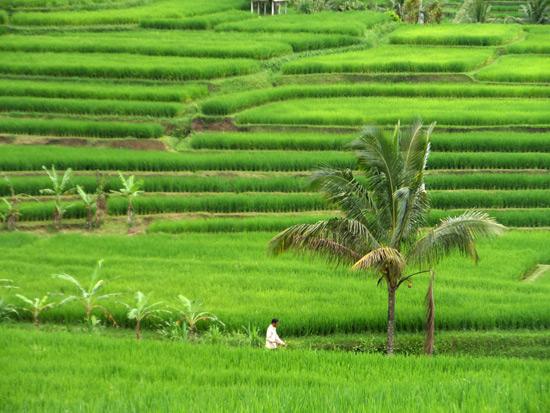 มรดกโลก ที่เกาะบาหลี อินโดนีเซีย
